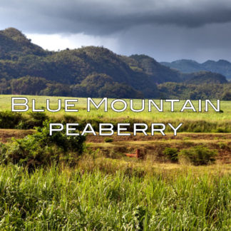 blue-mountain-coffee-peaberry