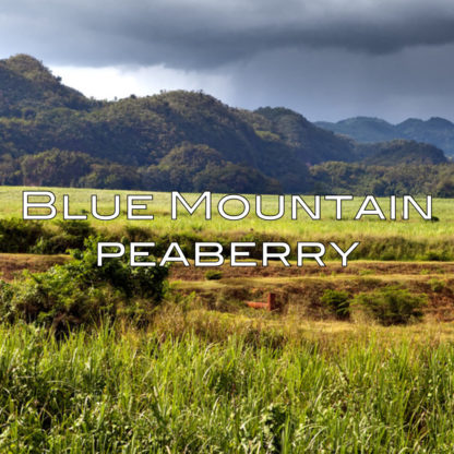 blue-mountain-coffee-peaberry