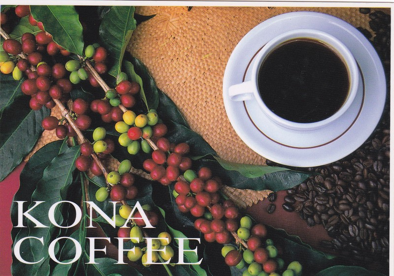 Kona Coffee From Hawaii Coffee Company